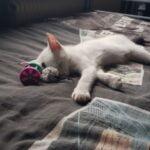 spike-foto-kattenherplaatsing (2)