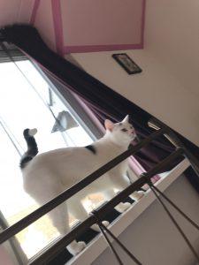 spike-herplaatsing-witte-kat-kattenherplaatsing (6)