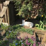 spike-kattenherplaatsing-gereserveerd