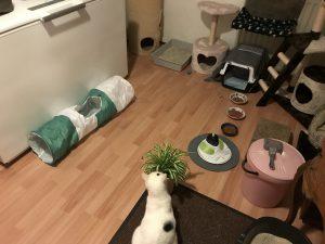 spike-kattenkamer-opvang (1)