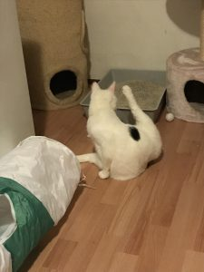 spike-opvang-kattenherplaatsing (3)