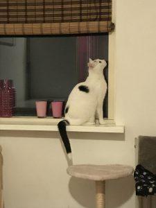 spike-opvang-kattenherplaatsing (9)