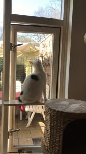 spike-raam-kattenherplaatsing
