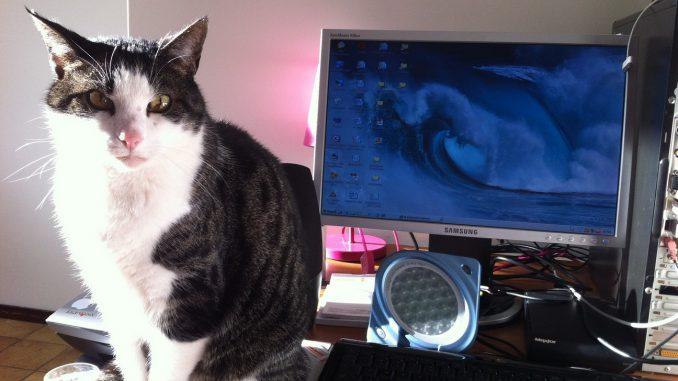 2012-03-18-kat-jinn-computer-marieke-kattenvoorlichting