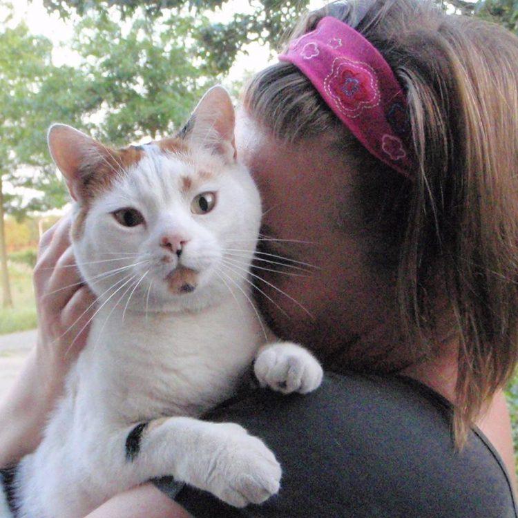 strayfie-wereldzwerfdierendag-kattenherplaatsing-aandacht-zwerfkatten