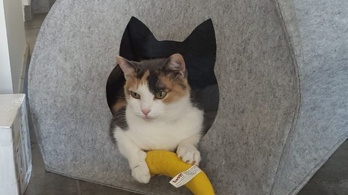 amie-stichting-beertje-kattenherplaatsing
