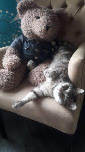 joep-lola-nieuwe-huis-brits-britse-kortharen-kattenherplaatsing