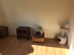 kattenherplaatsing-kattenopvang-kattenkamer-binnenkat-foto1