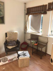 kattenherplaatsing-kattenopvang-kattenkamer-binnenkat-foto