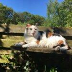 mariekes-meisje-chloe-vermist-kattenvoorlichting-kat-cuijk-plankje-tuin