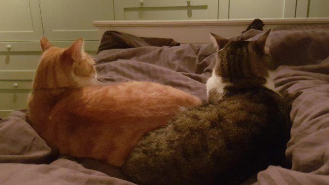 milo-en-siep-zoeken-samen-een-thuis-kattenherplaatsing-broertjes