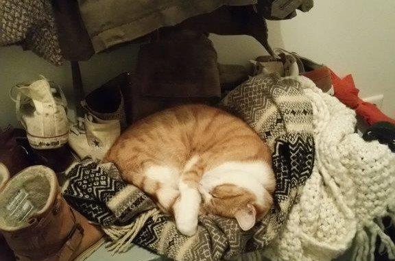 milo-en-siep-zoeken-samen-een-thuis-kattenherplaatsing