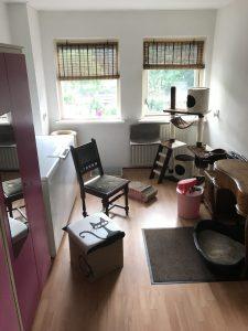 opvangkamer-kattenopvang-cuijk-kattenvoorlichting-kattenherplaatsing-schoonmaak-van-de-opvangkamer-voor-katten
