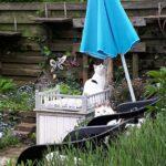 spike-tuin-laatste-foto-verhuizing-kattenherplaatsing