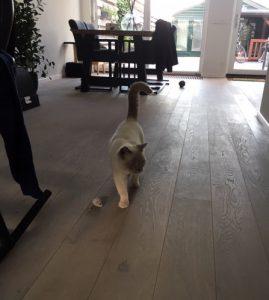 update-joep-lola-nieuwe-thuis-kattenherplaatsing2