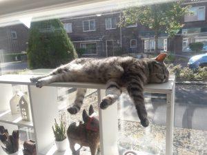 update-joep-lola-nieuwe-thuis-kattenherplaatsing3