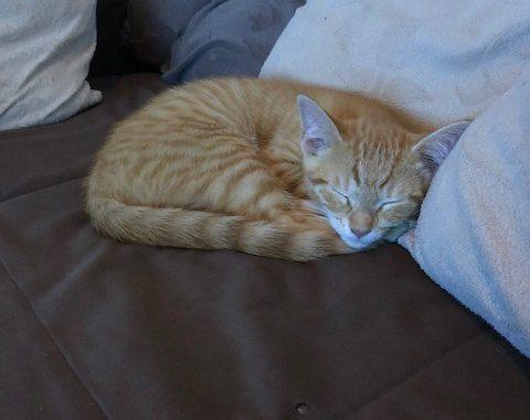 kitten-gino-amsterdam-kattenherplaatsing-kittenherplaatsing (2)
