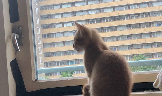 kitten-gino-amsterdam-kattenherplaatsing-kittenherplaatsing (5)