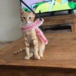 kitten-gino-amsterdam-kattenherplaatsing-kittenherplaatsing (6)