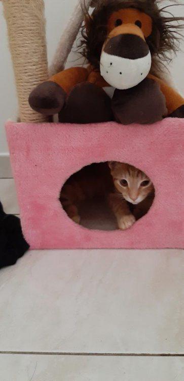 kitten-gino-nieuwe thuis