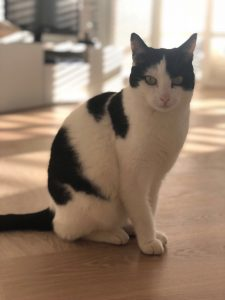 mika-kattenherplaatsing-herplaatsing-kat-thuis-gezocht4