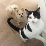 mika-kattenherplaatsing-herplaatsing-kat-thuis-gezocht5