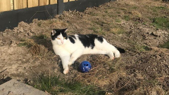 mika-kattenherplaatsing-herplaatsing-kat-thuis-gezocht7