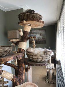 elsa-herplaatsing-ragdoll-kattenherplaatsing (1)
