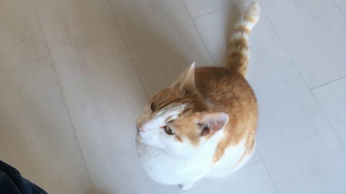heres-johnny-kattenherplaatsing-herplaatsing-kat