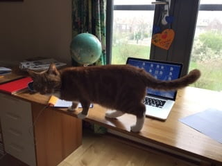 sem-thuis-gezocht-kattenherplaatsing
