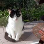 poekie-kattenherplaatsing