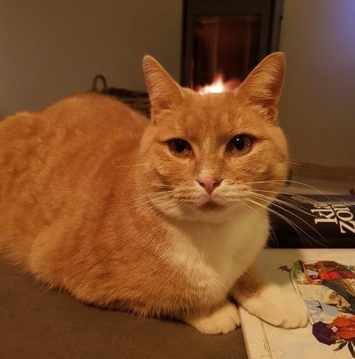 herplaatsing-kat-sammie-kattenherplaatsing