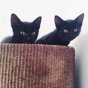jimi-dexter-herplaatsing-katten-kattenherplaatsing
