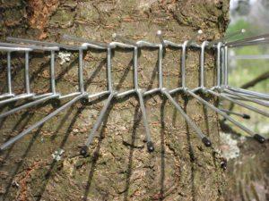 kattengordel-waveka-foto-kattenvoorlichting-tuin-katten