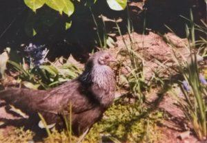 kip-jackie-marieke-1990-kattenvoorlichting