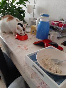 petey-succesvol-herplaatst-kattenherplaatsing-samen-ontbijten-kat