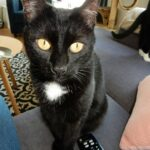toet-kattenherplaatsing-kat (3)