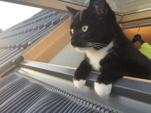 Phien-kattenherplaatsing-poes