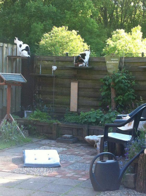 hoge-ligplankjes-uitkijkposten-katten-kattenvoorlichting-tuin-verrijking