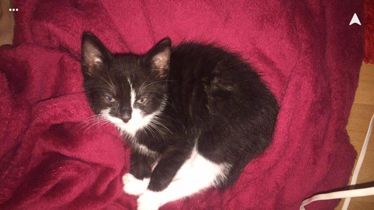 mino-herplaatsing-kitten-poesje-kattenherplaatsing