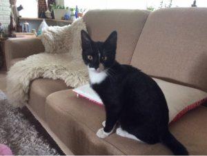 mino-nieuwe-thuis-geslaagde-kattenherplaatsing-foto