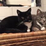phien-muis-zeist-kattenherplaatsing-katten
