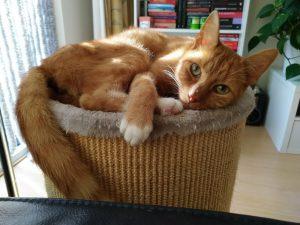 mykki-hermafrodiet-kater-kattenherplaatsing-kattenvoorlichting