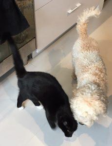 phien-muis-hond-kattenherplaatsing-kat