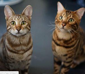 tyga-sevn-foto-kattenherplaatsing2