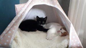 Zazu-Ritsel-roze-sleutel-interview-kattenvoorlichting