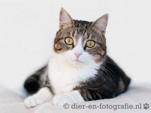 herplaatsing-benjamin-eindhoven-kattenherplaatsing