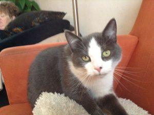 herplaatsing-lotje-eindhoven-kattenherplaatsing (1)