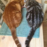 herplaatsing-pim-sem-kattenherplaatsing (1)