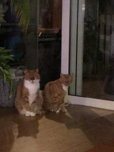 herplaatsing-sam-moos-zoetermeer-kattenherplaatsing (2)